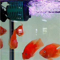 Using Powerful Neodymium Magnets in an Glass or Acrylic Aquarium